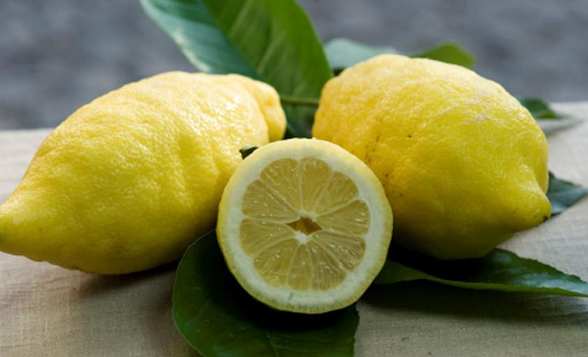 Pianta di limone sfusato amalfitano in vaso 20 cm savini for Pianta di limone