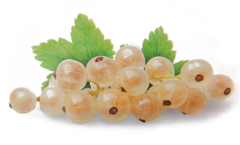 ribes-bianco-werdavia.jpg