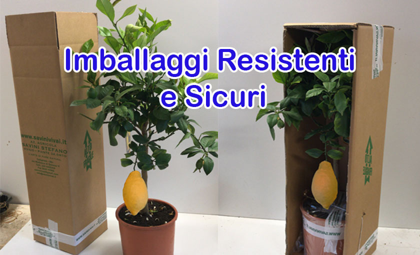 imaballaggi-vaso-20_1.jpg