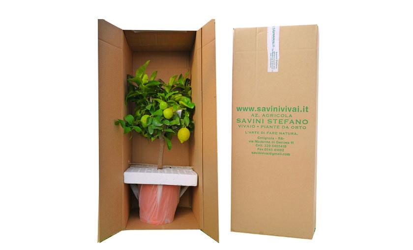 imballaggio-agrumi-savinivivai.jpg