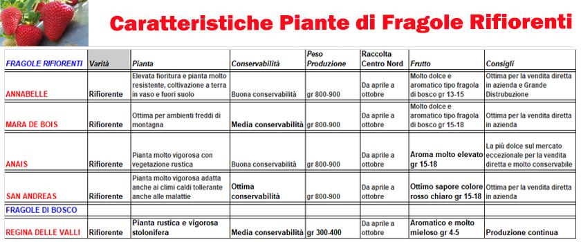 caratteristiche-fragole-rifiorenti2.jpg