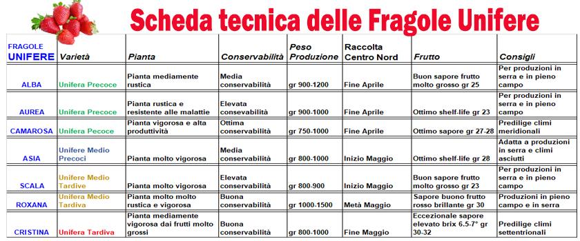 Vendita online piantine di fragole in vaschetta da 6 for Acquisto piantine da orto online