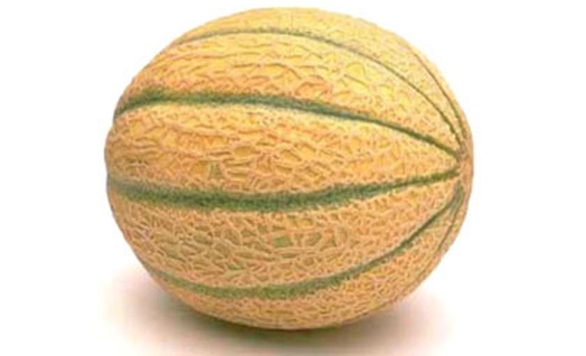 Piante di melone retato macigno f1 vaschetta da 4 piante for Pianta di melone