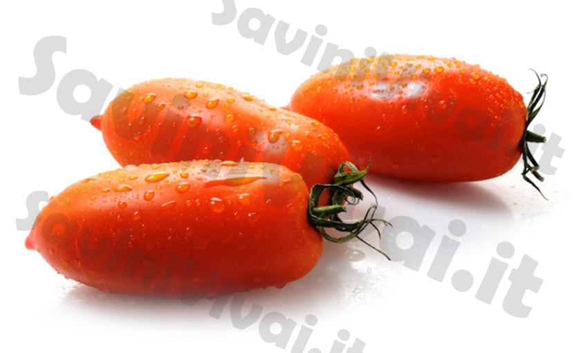 Piante di pomodoro allungato portento f1 in vaso 10 cm for Piante pomodori in vaso