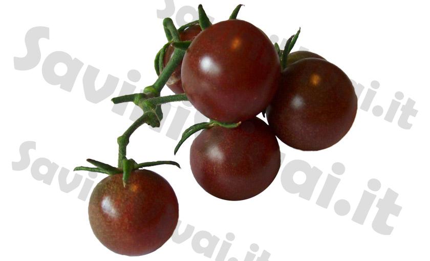 25 semi semi rari pianta Goji Black GOJI NERO