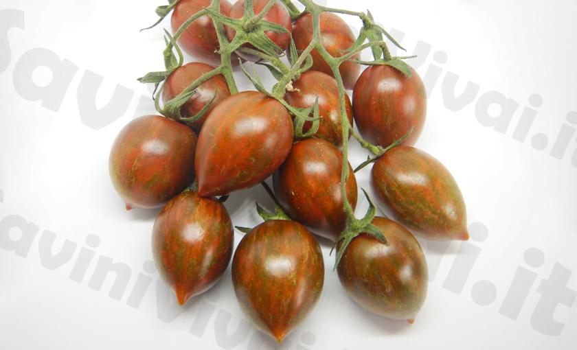 Piante di pomodoro datterino tigrato melange f1 in vaso 10 for Piante pomodori in vaso