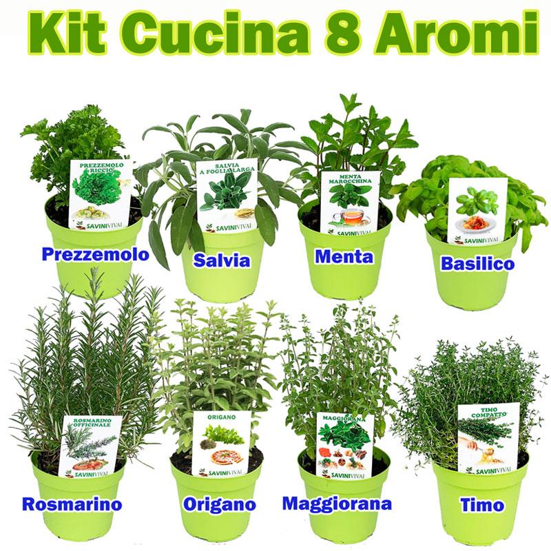 Pacchetto Kit Cucina 8 Aromi vaso 14 - Savini Vivai di ...