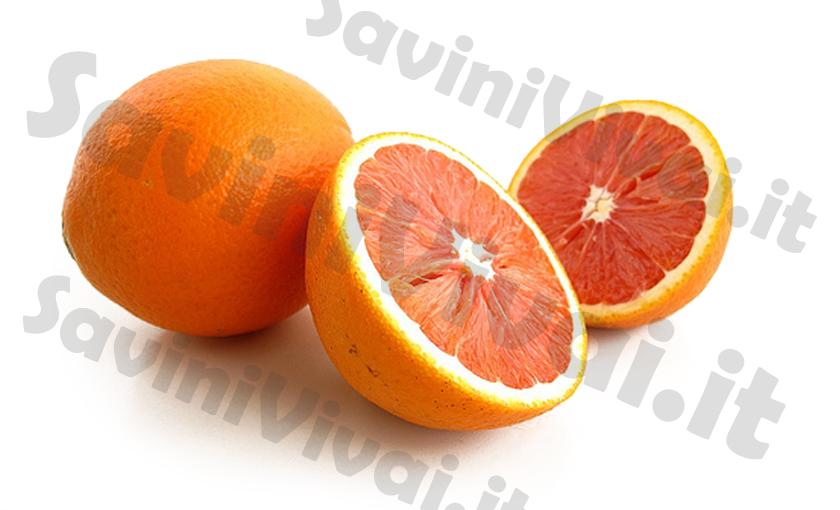 00--pianta-di-arancio-navel-caracara-in-