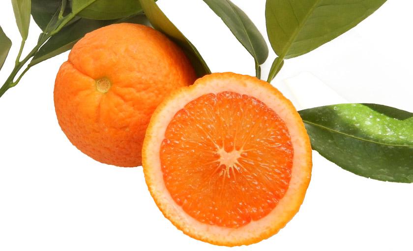frutto-di-arancio-vaniglia.jpg
