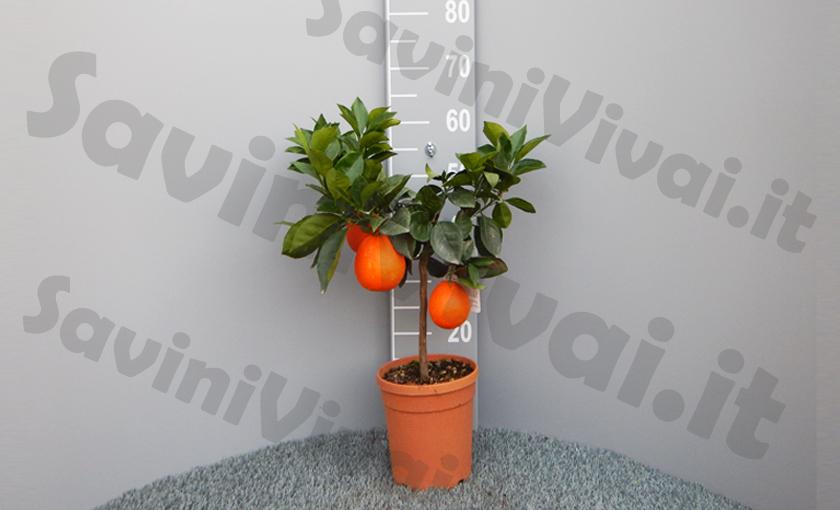 arancio-w-navel.jpg