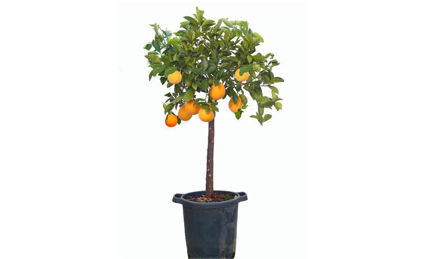 Piante di arancio - Rifacimento bagno manutenzione ordinaria o straordinaria ...