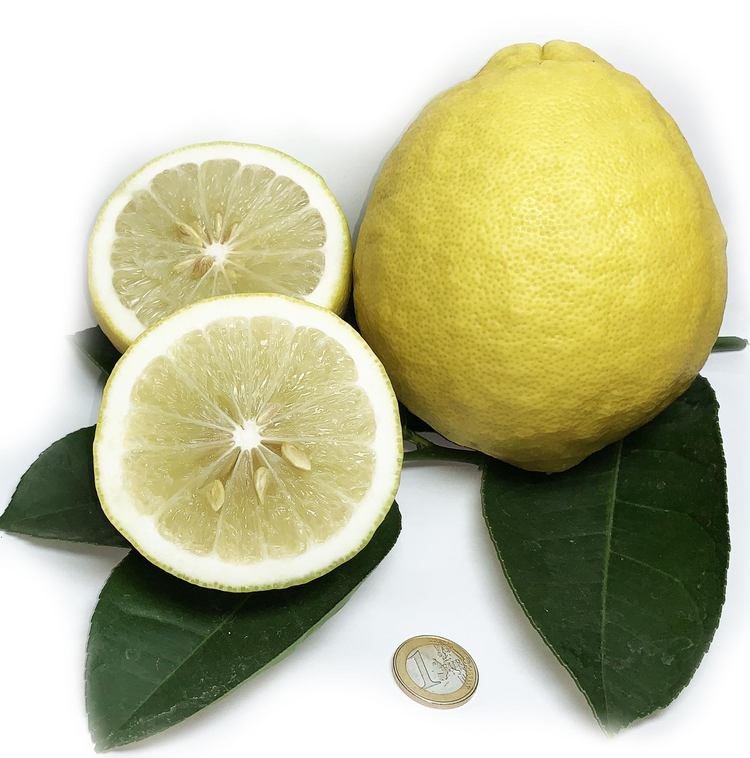 Limone-Imperiale3originale.jpg