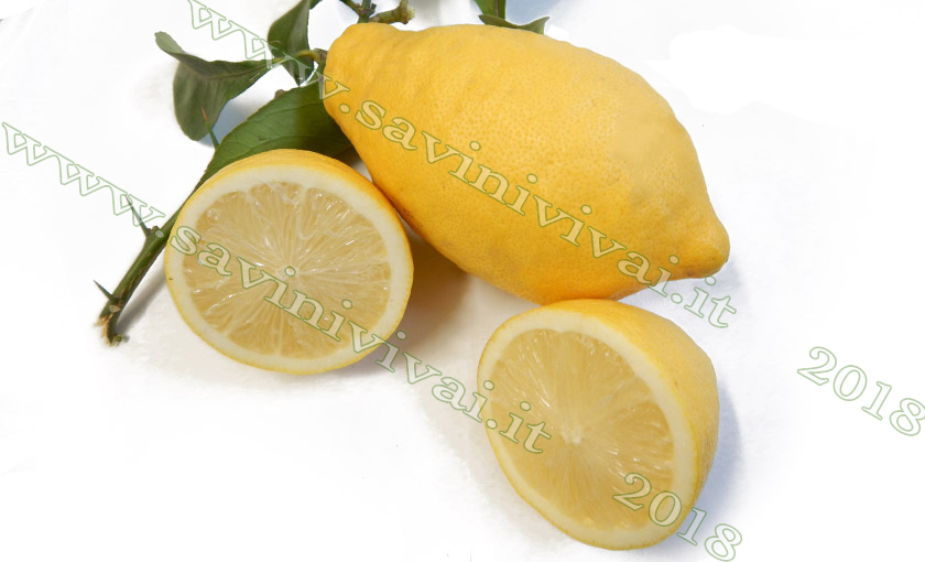 frutto-di-limone-lunario-1.jpg