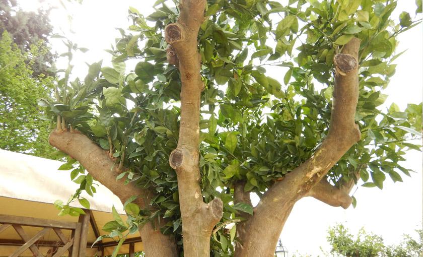 frutto-arancio-esemplare.jpg
