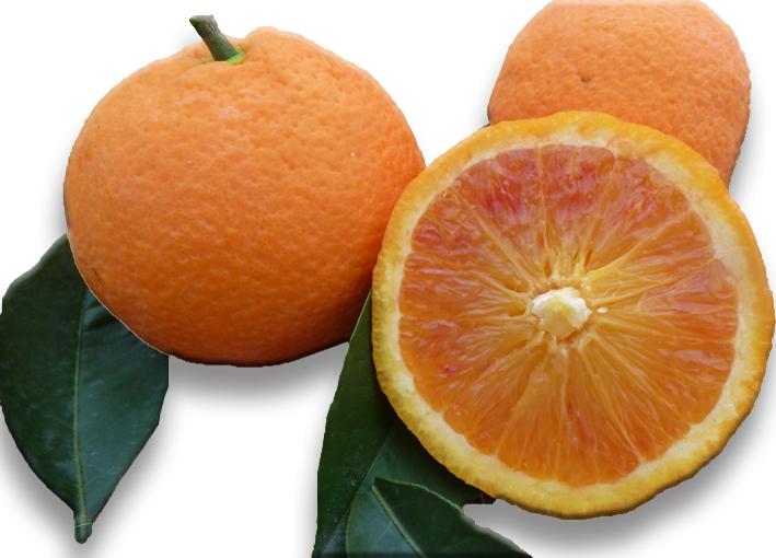 arancio-tarocco-gallo.jpg