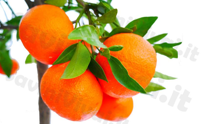 clementino-isa-vaso-35-1.jpg