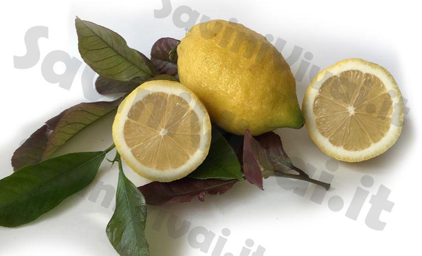 Pianta di limone femminello carrubaro 4 stagioni alta 100 for Pianta di limone