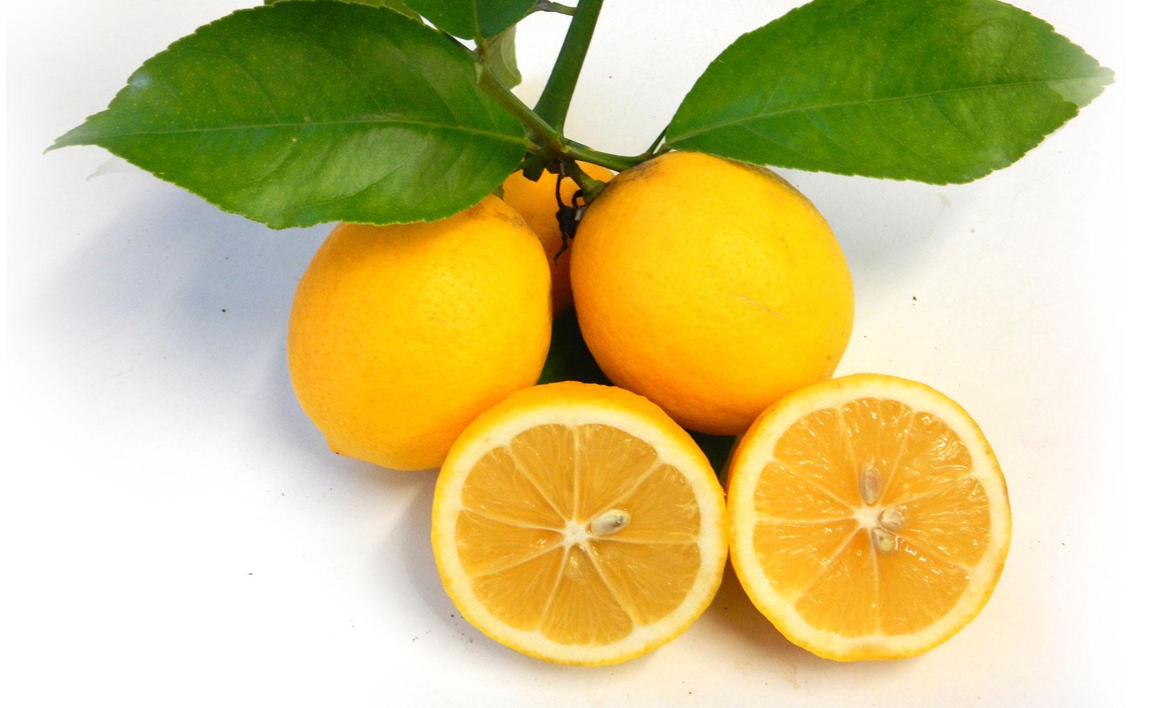Pianta di limone meyer in vaso 20 22 cm savini vivai di for Pianta di limone