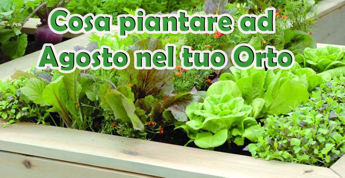 Cosa piantare ad agosto savini vivai di savini stefano for Cosa piantare nell orto adesso