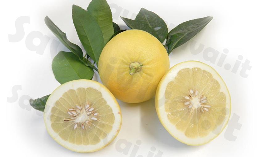 pompelmo-giallo-frutto.jpg