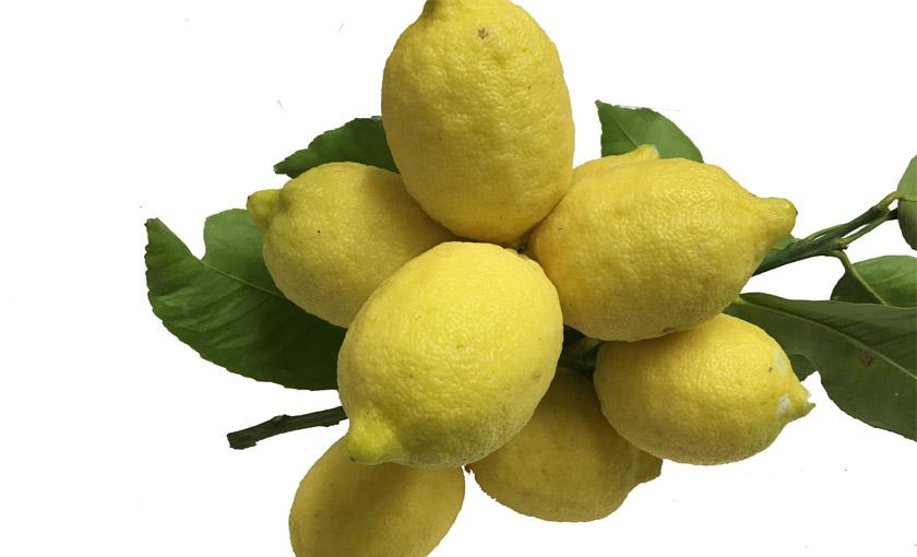 limone-4-stagioni-savinivvivai